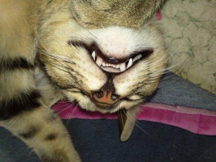 Ngủ hở... mười cái răng
