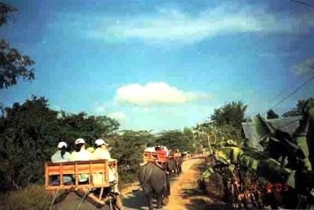 Cưỡi voi - voi đi lắc lư, ngồi không có dây an toàn, chỉ sợ rớt xuống đất