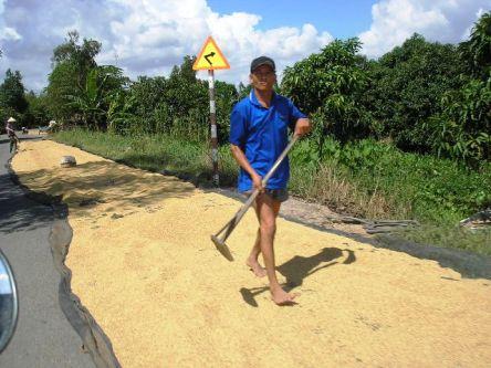 Mùa thu hoạch lúa, bà con nông dân trải lúa ra phơi trên đường, nhiều khi chiếm hết con đường xe chạy.