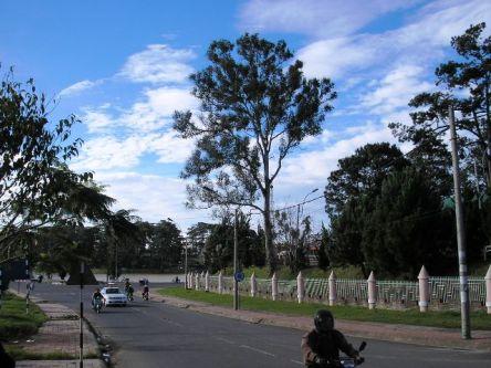 Con đường bên đồi thông hai mộ