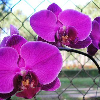Đà Lạt còn là nơi cho bạn thỏa thích... ngắm hoa và... mua hoa :)