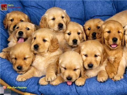 Đố bạn có mấy con cún?