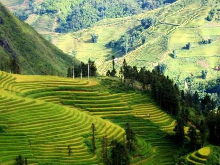 Ruộng bậc thang trùng trùng điệp điệp uốn lượn theo sườn núi, có rất nhiều ruộng bậc thang suốt từ Tp. Lào Cai đến Sapa