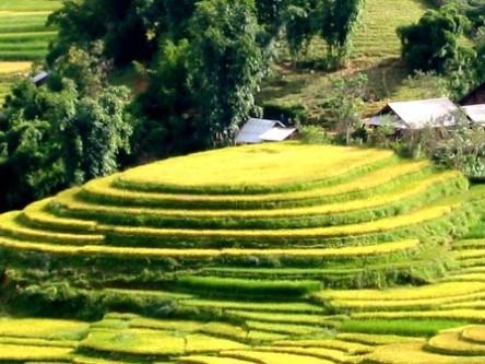 Ruộng bậc thang trên đường từ TX Lào Cai lên Sapa (30km)
