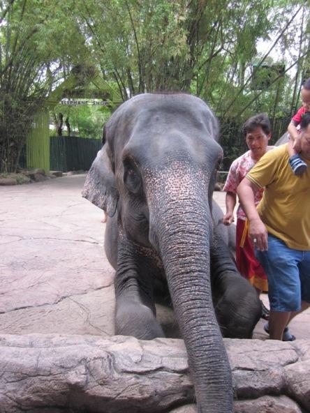 Đây là con voi mà lần đầu tôi được sờ vào vòi của nó