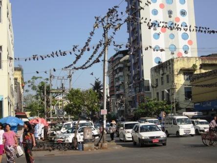 Bồ câu rất nhiều ở Yangon